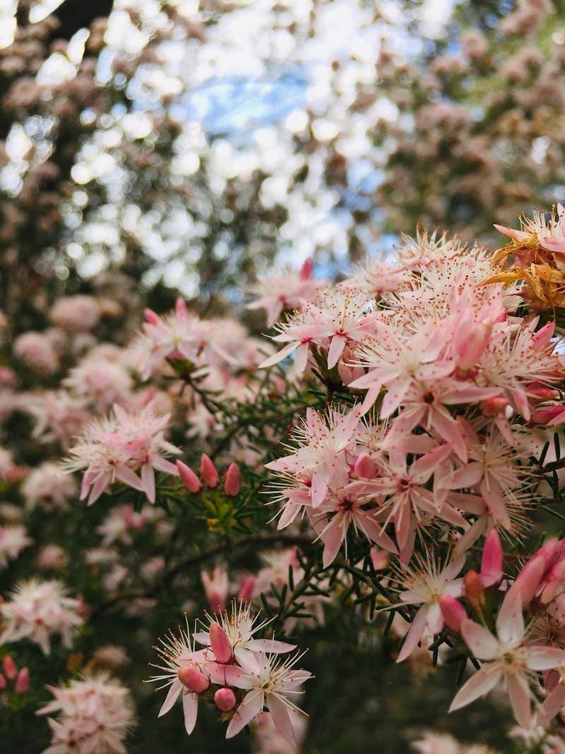 maranoa gardens, to go with kids melbourne, best botanical gardens melbourne, best parks melbourne, pretty flowers