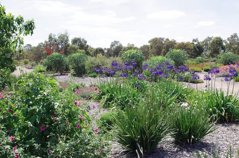 melton botanic garden, to go with kids melbourne, best botanical gardens melbourne, best walks melbourne, best parks melbourne, indigenous plants melbourne