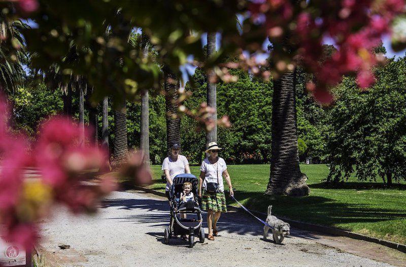 St Kilda Botanical Gardens, rose garden, melbourne kids things to do, parks melbourne kids, best melbourne walks
