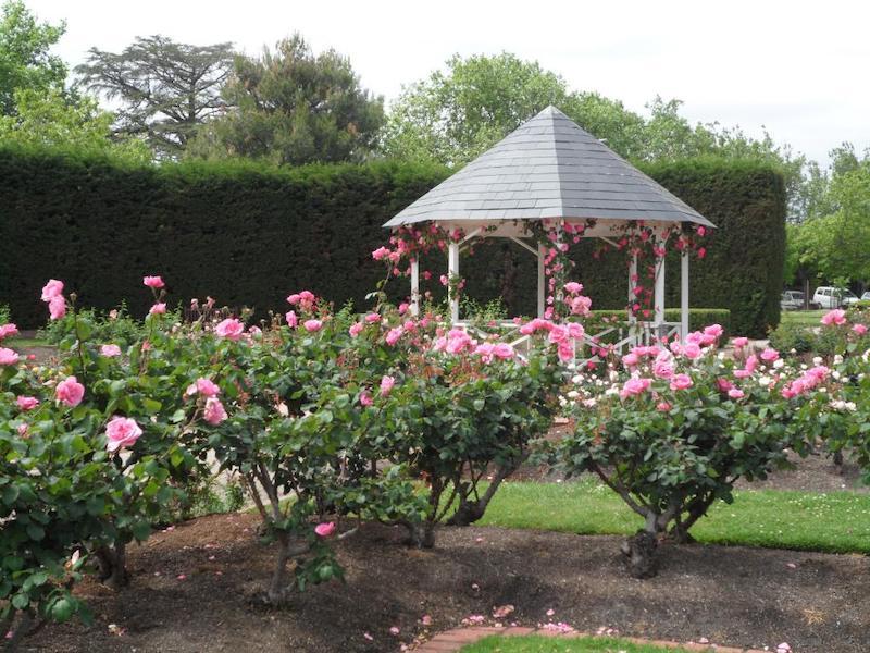 St Kilda Botanical Gardens, rose garden, best botanical gardens melbourne, melbourne kids activities, parks melbourne kids, best melbourne walks, picnics