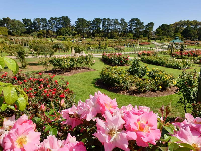 vic state rose garden melbourne, kids friendly gardens, family fun melbourne, werribee, pretty places in melbourne