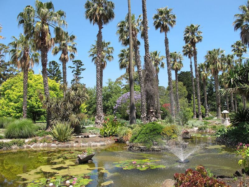 Williamstown Botanic Gardens, palm trees, ornamental pond, melbourne kids to do, parks melbourne kids, best picnic spots melbourne, beautiful gardens melbourne, best botanic gardens melbourne